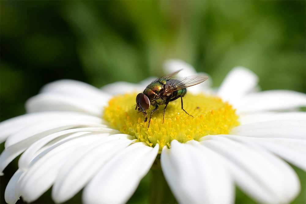 How To Photograph Insects And Other Small Creatures Tips For Macro